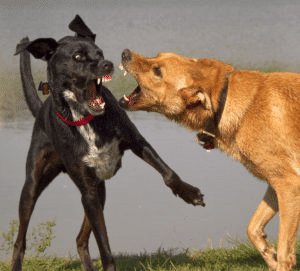 dog attacks another dog
