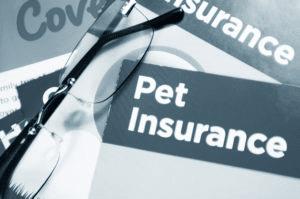 mascota de seguros