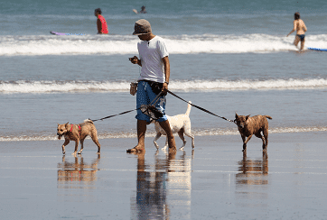 Galveston Leash Laws and Dog Bite Laws