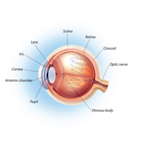 A diagram of the eye.